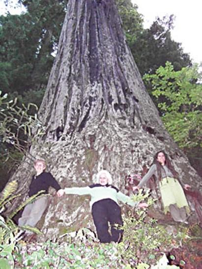 cvr-hw-treehug_1812.jpg